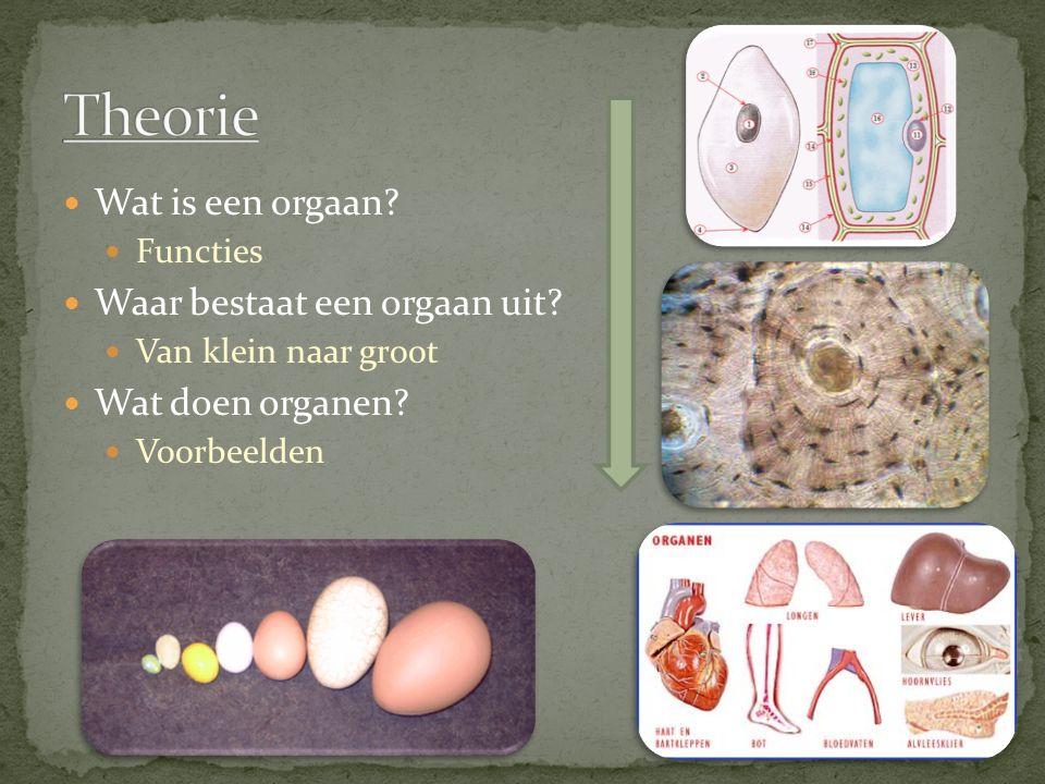 Wat is een orgaan.Functies Waar bestaat een orgaan uit.