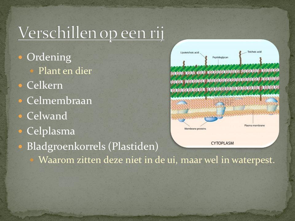 Ordening Plant en dier Celkern Celmembraan Celwand Celplasma Bladgroenkorrels (Plastiden) Waarom zitten deze niet in de ui, maar wel in waterpest.