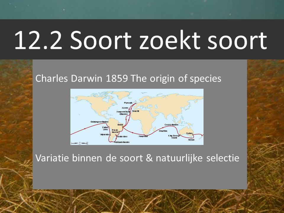 12.2 Soort zoekt soort Charles Darwin 1859 The origin of species Variatie binnen de soort & natuurlijke selectie