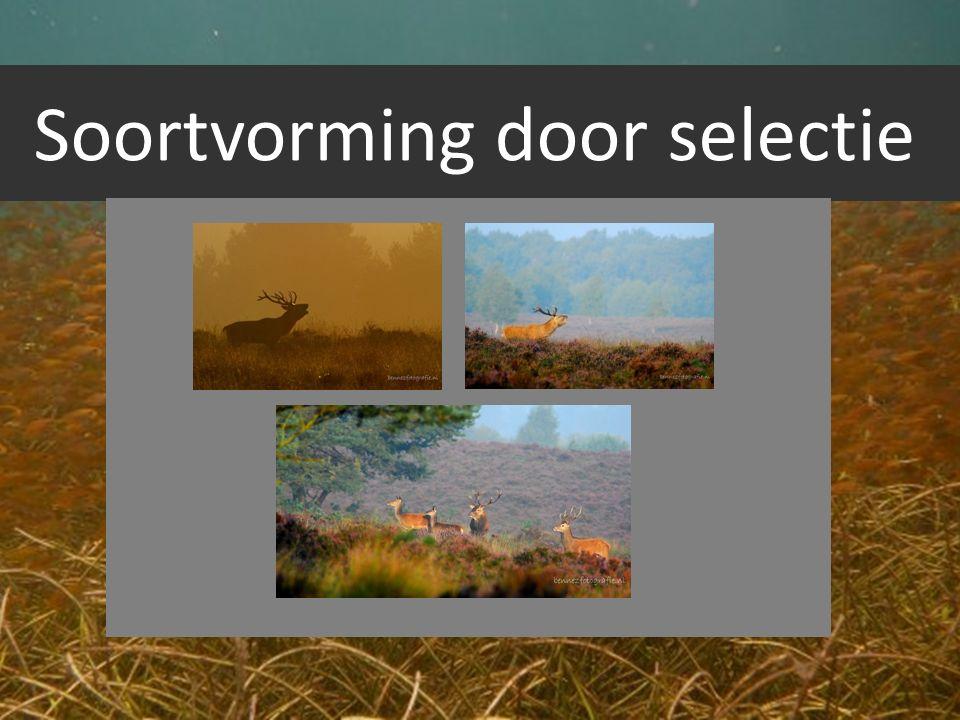 Soortvorming door selectie