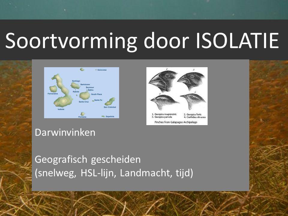 Soortvorming door ISOLATIE Darwinvinken Geografisch gescheiden (snelweg, HSL-lijn, Landmacht, tijd)