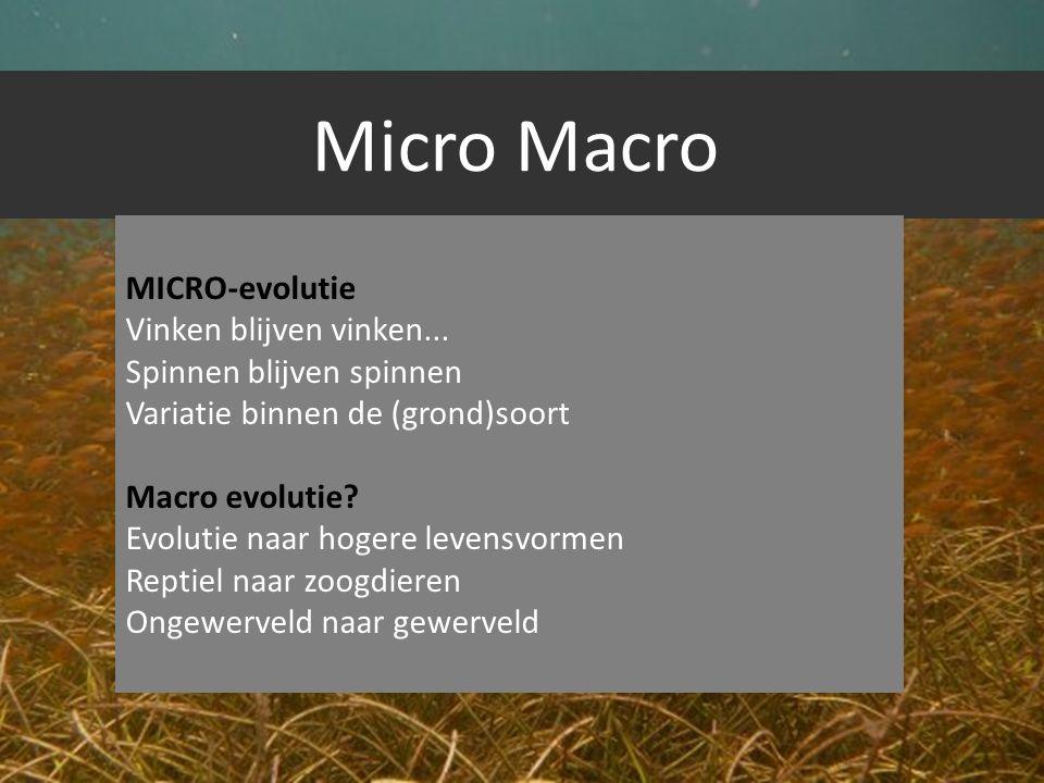 Micro Macro MICRO-evolutie Vinken blijven vinken... Spinnen blijven spinnen Variatie binnen de (grond)soort Macro evolutie? Evolutie naar hogere leven