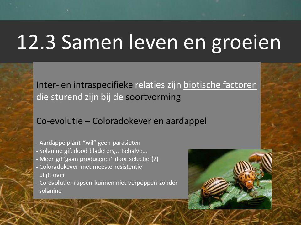 12.3 Samen leven en groeien Inter- en intraspecifieke relaties zijn biotische factoren die sturend zijn bij de soortvorming Co-evolutie – Coloradokeve