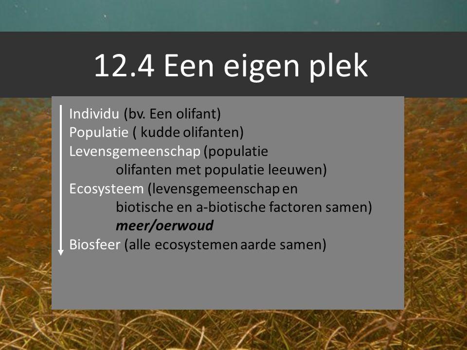 12.4 Een eigen plek Individu (bv. Een olifant) Populatie ( kudde olifanten) Levensgemeenschap (populatie olifanten met populatie leeuwen) Ecosysteem (