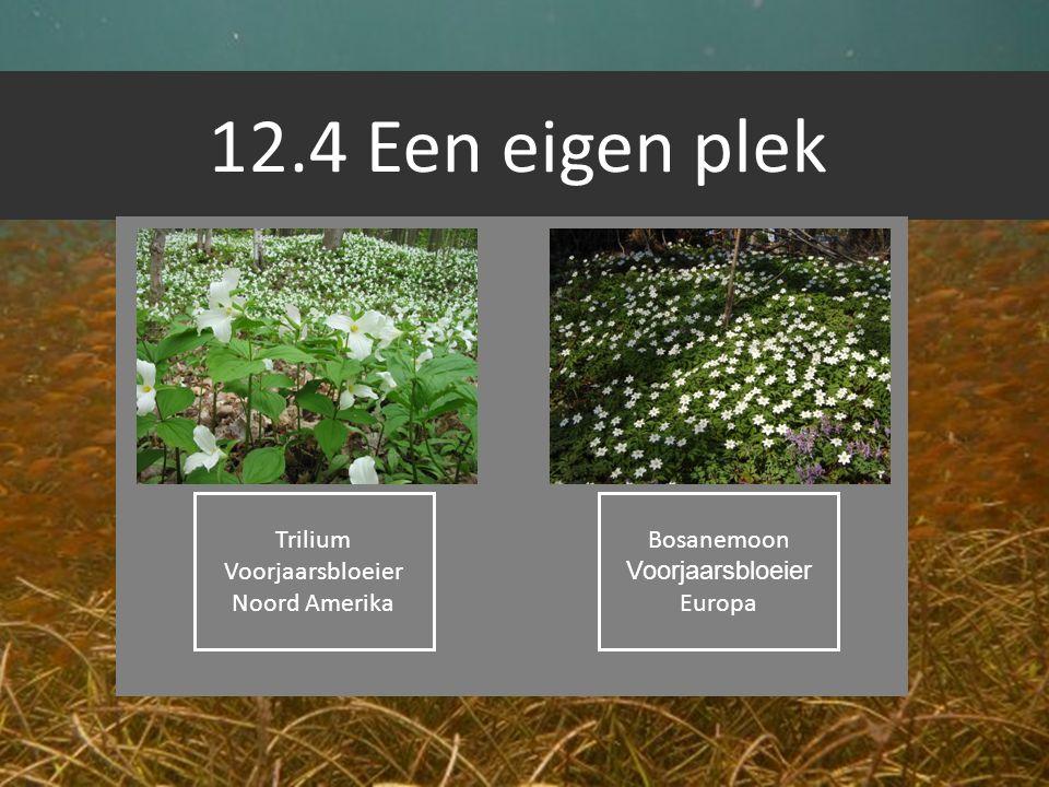 12.4 Een eigen plek Trilium Voorjaarsbloeier Noord Amerika Bosanemoon Voorjaarsbloeier Europa