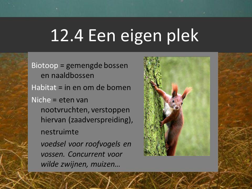 12.4 Een eigen plek Biotoop = gemengde bossen en naaldbossen Habitat = in en om de bomen Niche = eten van nootvruchten, verstoppen hiervan (zaadverspr