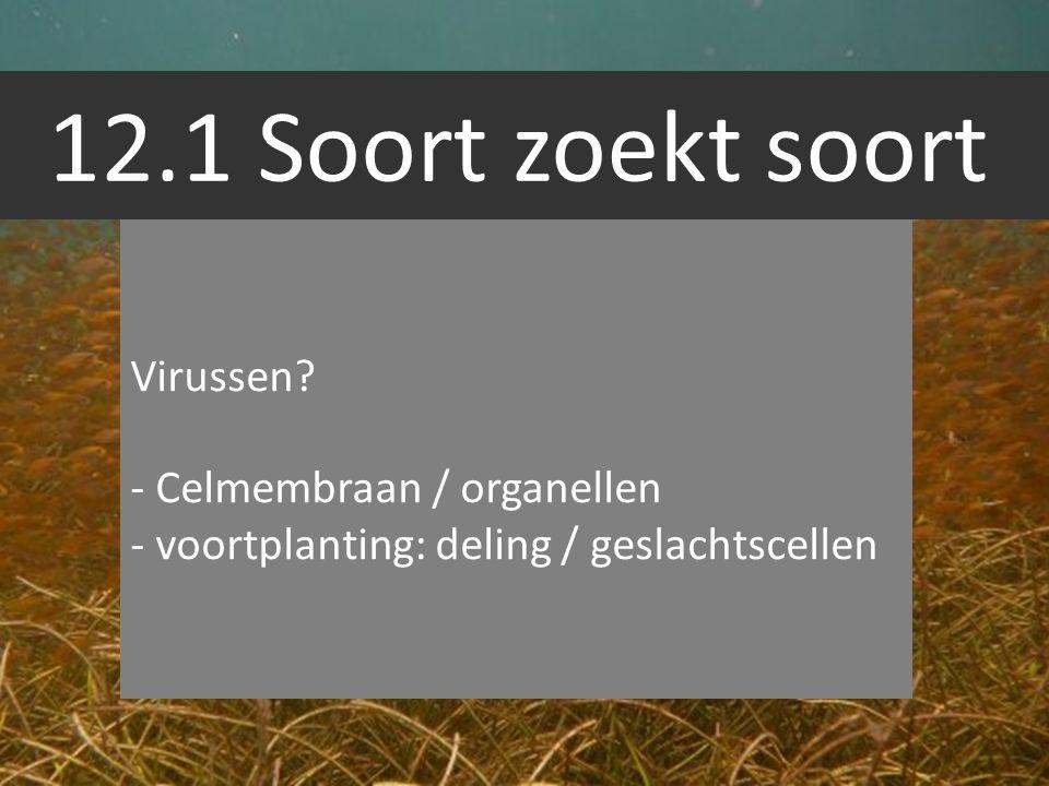 12.1 Soort zoekt soort Bacterien celwand geen celkern Geen bladgroenkorrels (behalve cyanobacterien) Eencellig Schadelijk / nuttig