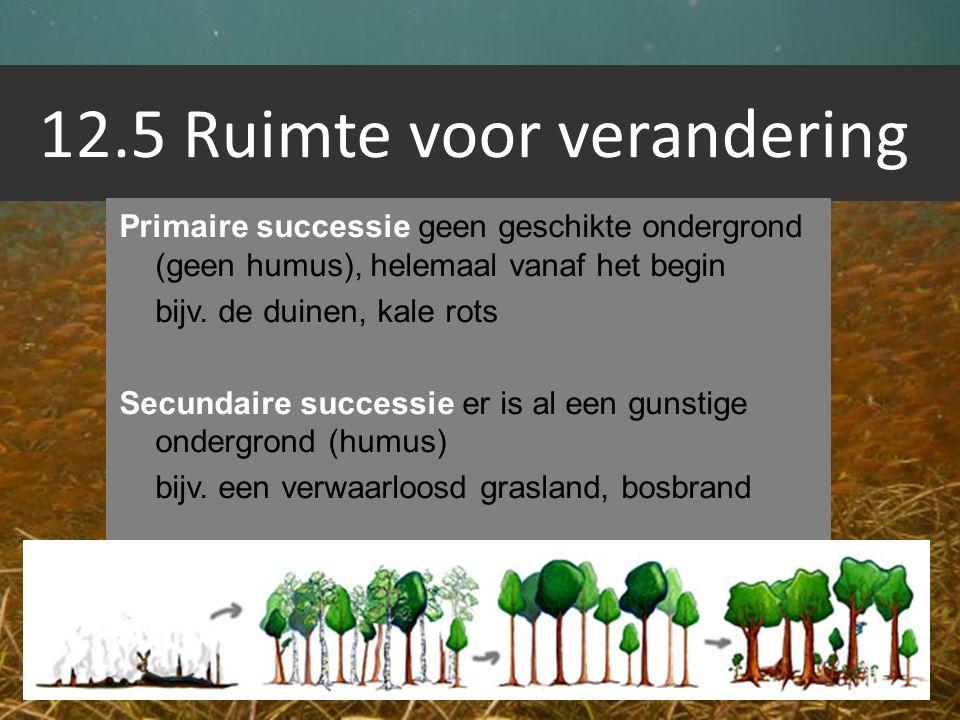 12.5 Ruimte voor verandering Primaire successie geen geschikte ondergrond (geen humus), helemaal vanaf het begin bijv. de duinen, kale rots Secundaire