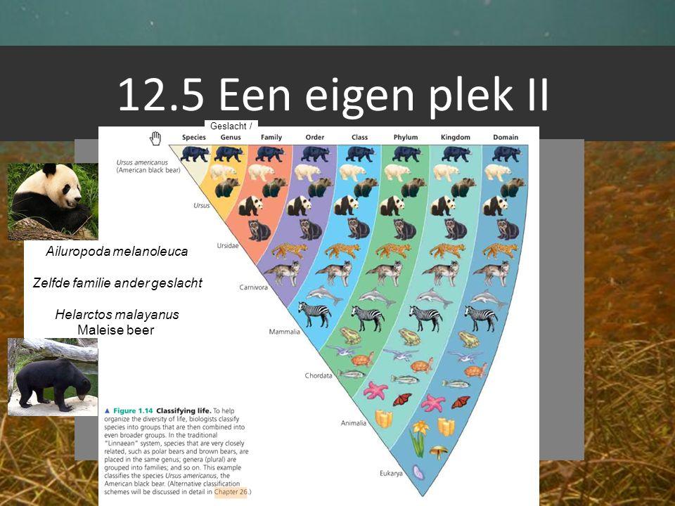 12.5 Een eigen plek II Geslacht / Ailuropoda melanoleuca Zelfde familie ander geslacht Helarctos malayanus Maleise beer