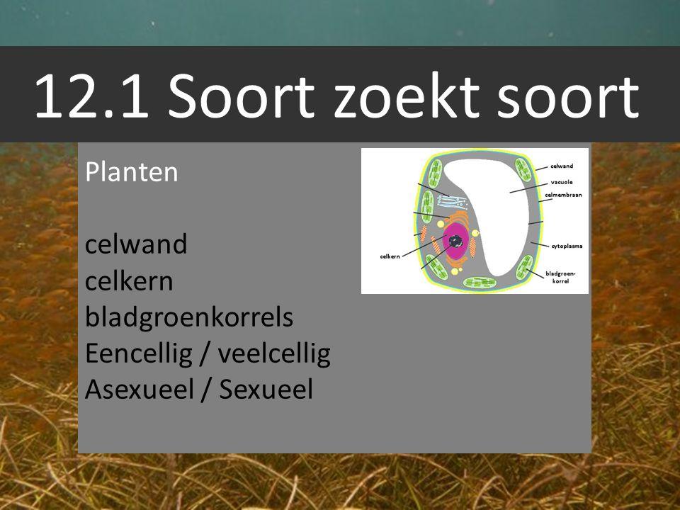 12.1 Soort zoekt soort Dieren Geen celwand celkern Geen bladgroenkorrels Eencellig / veelcellig Asexueel / Sexueel