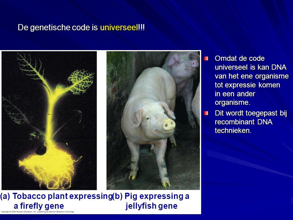 De genetische code is universeel!!! Omdat de code universeel is kan DNA van het ene organisme tot expressie komen in een ander organisme. Dit wordt to