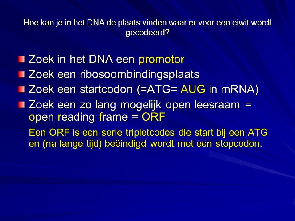 Hoe kan je in het DNA de plaats vinden waar er voor een eiwit wordt gecodeerd? Zoek in het DNA een promotor Zoek een ribosoombindingsplaats Zoek een s