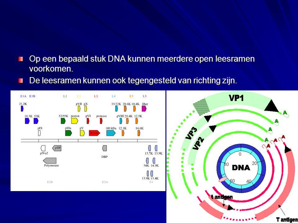 Op een bepaald stuk DNA kunnen meerdere open leesramen voorkomen. De leesramen kunnen ook tegengesteld van richting zijn.