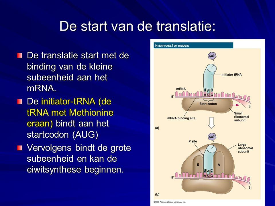 De start van de translatie: De translatie start met de binding van de kleine subeenheid aan het mRNA. De initiator-tRNA (de tRNA met Methionine eraan)