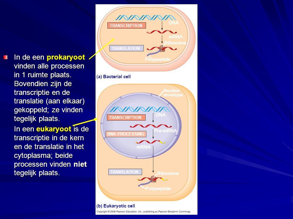 In de een prokaryoot vinden alle processen in 1 ruimte plaats. Bovendien zijn de transcriptie en de translatie (aan elkaar) gekoppeld; ze vinden tegel