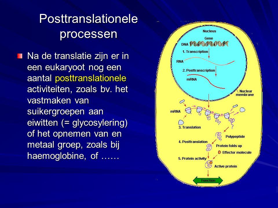 Posttranslationele processen Na de translatie zijn er in een eukaryoot nog een aantal posttranslationele activiteiten, zoals bv. het vastmaken van sui