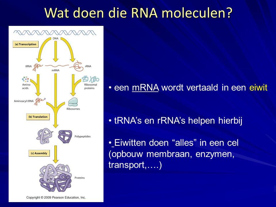 """Wat doen die RNA moleculen? een mRNA wordt vertaald in een eiwit tRNA's en rRNA's helpen hierbij Eiwitten doen """"alles"""" in een cel (opbouw membraan, en"""