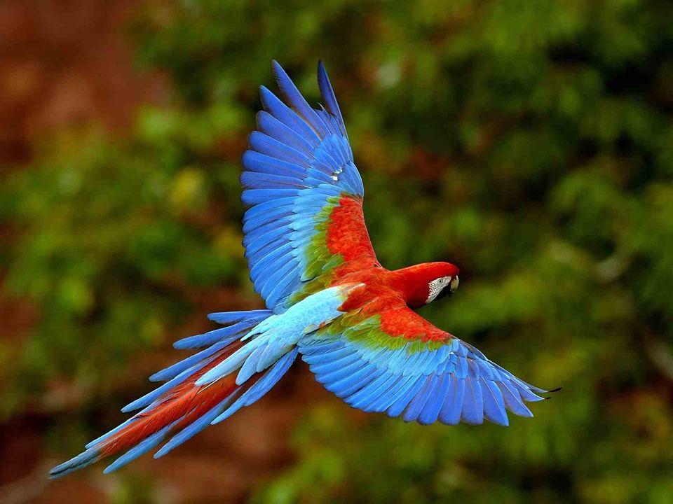 Dit Eden, waarbij de natuur een ecosysteem heeft geschapen dat enig is in de wereld dient als habitat voor : 3500 soorten planten 650 soorten vogels 300 soorten vissen 95 soorten zoogdieren 95 soorten zoogdieren 50 soorten reptielen 50 soorten reptielen