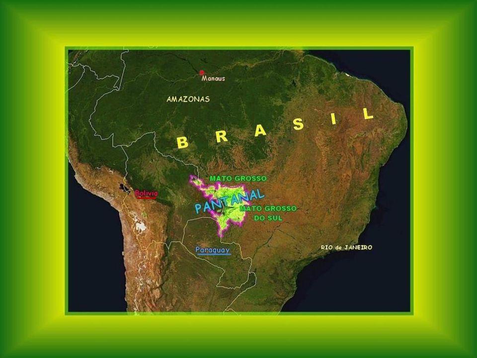 EL PANTANAL Is een ecosysteem, uniek in de wereld, met een oppervlakte zo groot als de helft van Frankrijk.