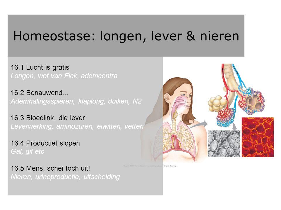 Homeostase: longen, lever & nieren Wat weten we ervan?