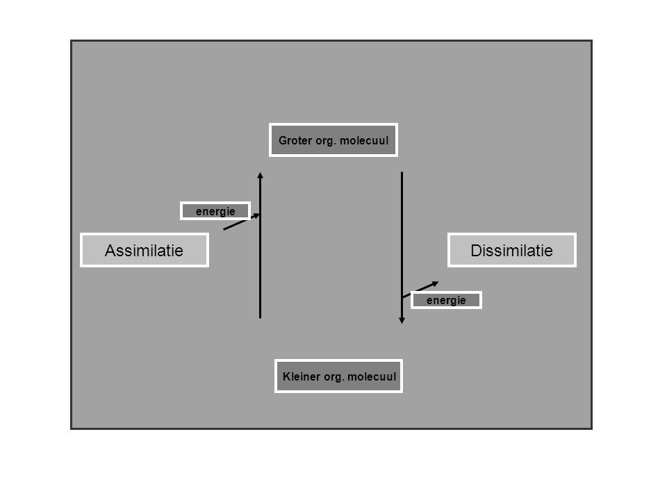 AssimilatieDissimilatie Groter org. molecuul Kleiner org. molecuul energie