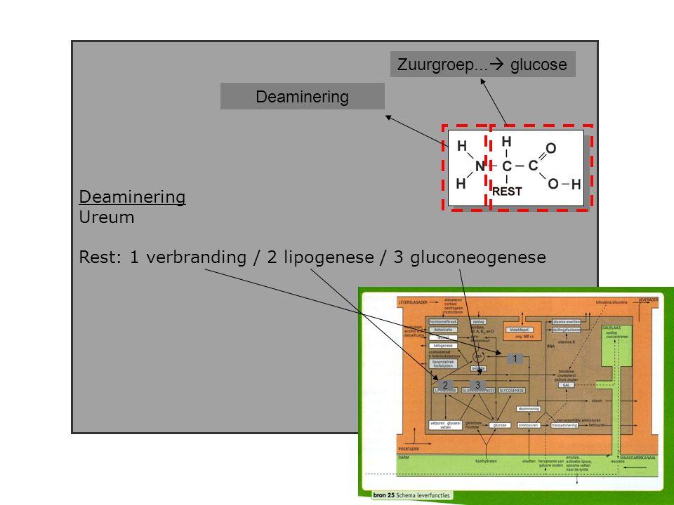 Deaminering Ureum Rest: 1 verbranding / 2 lipogenese / 3 gluconeogenese Deaminering Zuurgroep...
