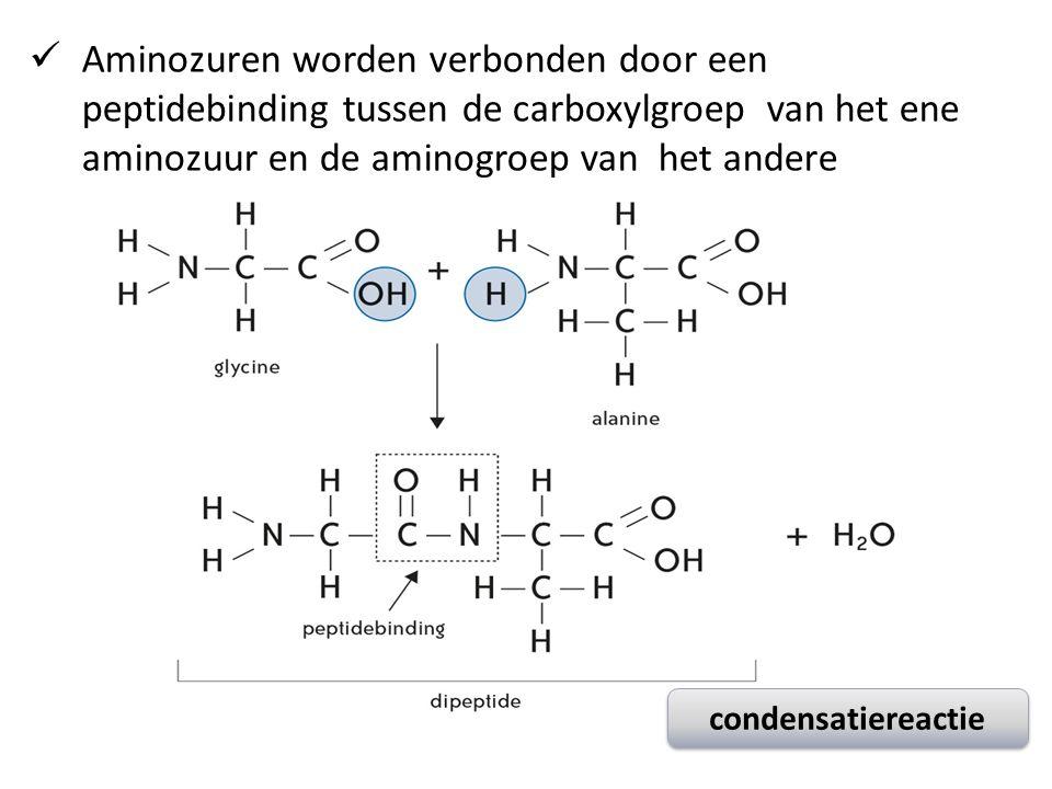 condensatiereactie Aminozuren worden verbonden door een peptidebinding tussen de carboxylgroep van het ene aminozuur en de aminogroep van het andere