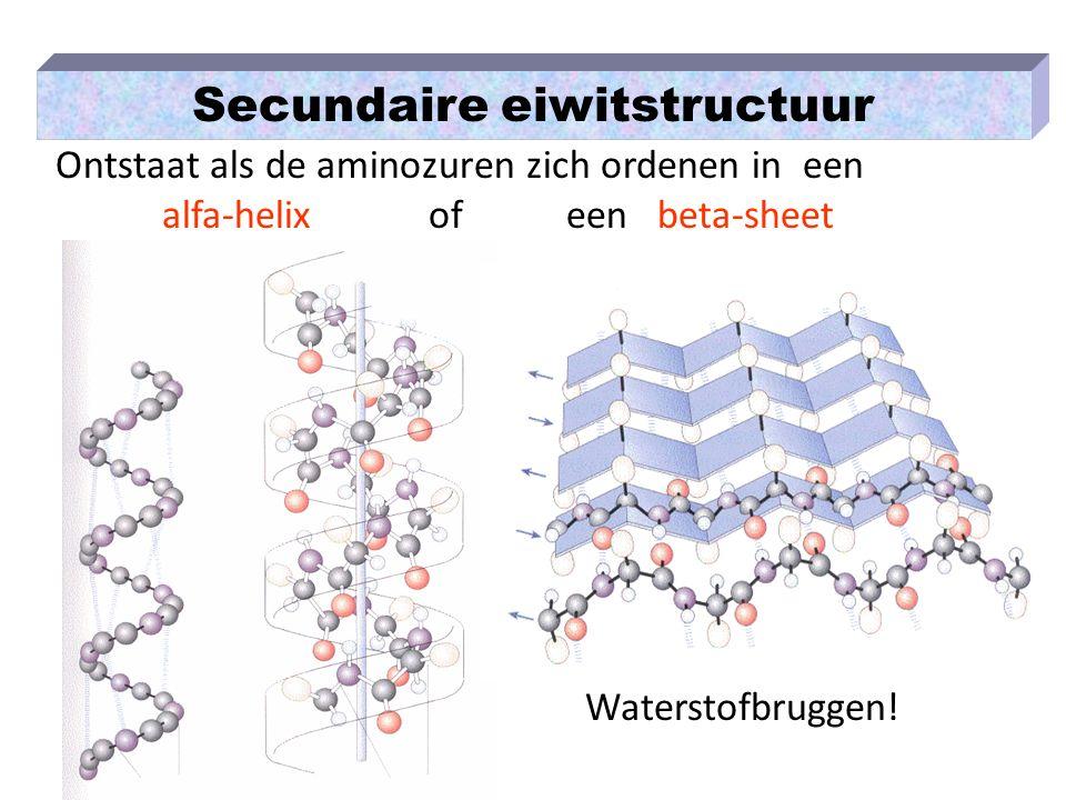 Secundaire eiwitstructuur Ontstaat als de aminozuren zich ordenen in een alfa-helix of een beta-sheet Waterstofbruggen!