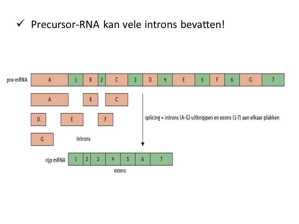 Precursor-RNA kan vele introns bevatten!