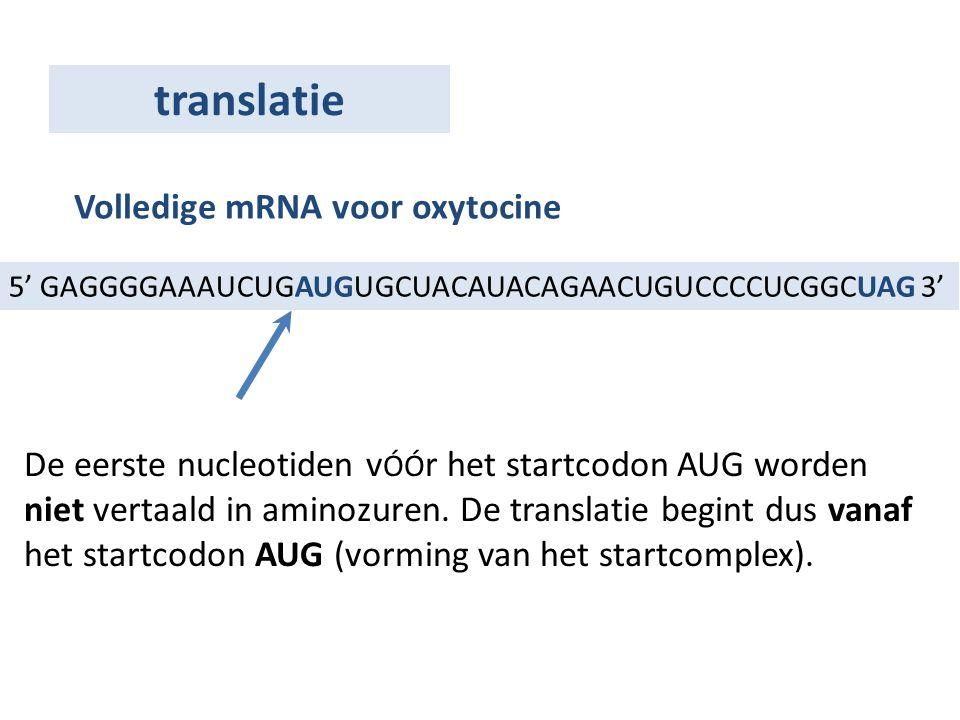 5' GAGGGGAAAUCUGAUGUGCUACAUACAGAACUGUCCCCUCGGCUAG 3' Volledige mRNA voor oxytocine De eerste nucleotiden v ÓÓ r het startcodon AUG worden niet vertaal