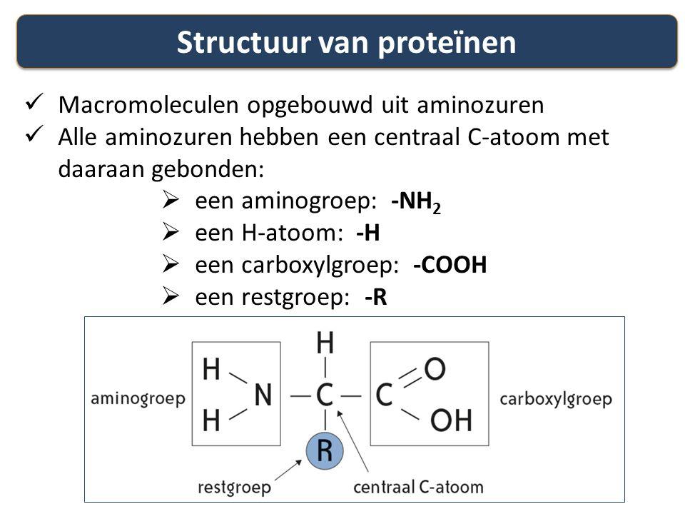 Structuur van proteïnen Macromoleculen opgebouwd uit aminozuren Alle aminozuren hebben een centraal C-atoom met daaraan gebonden:  een aminogroep: -N