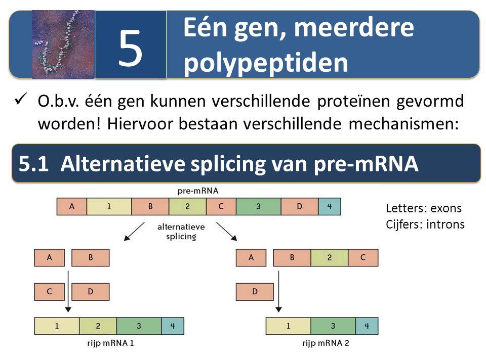 Eén gen, meerdere polypeptiden 5 5 O.b.v. één gen kunnen verschillende proteïnen gevormd worden! Hiervoor bestaan verschillende mechanismen: 5.1 Alter