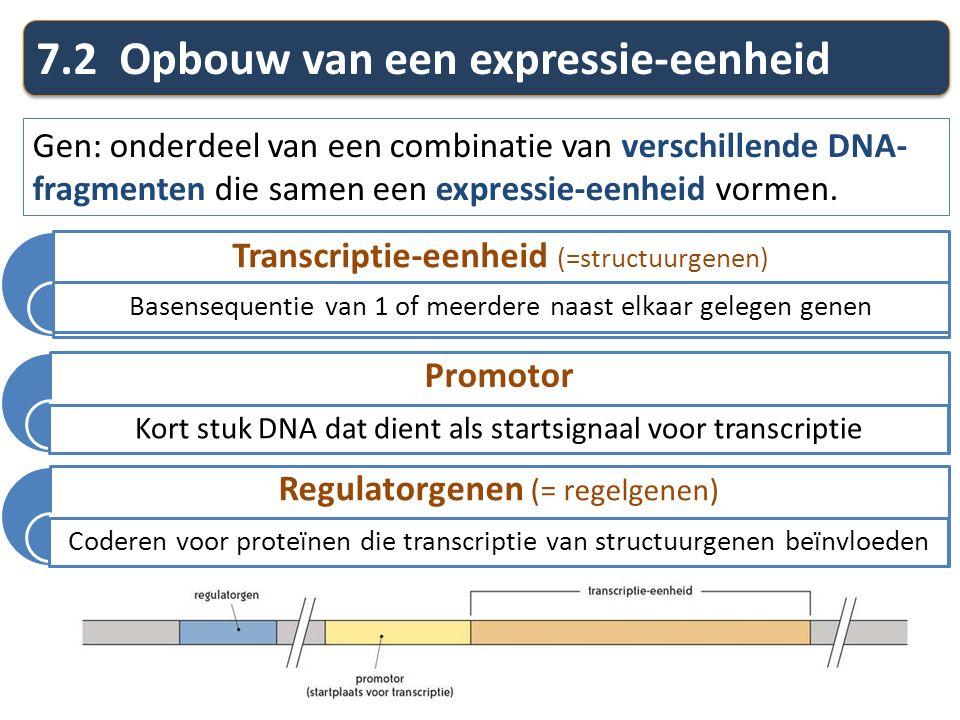 7.2 Opbouw van een expressie-eenheid Gen: onderdeel van een combinatie van verschillende DNA- fragmenten die samen een expressie-eenheid vormen. Trans