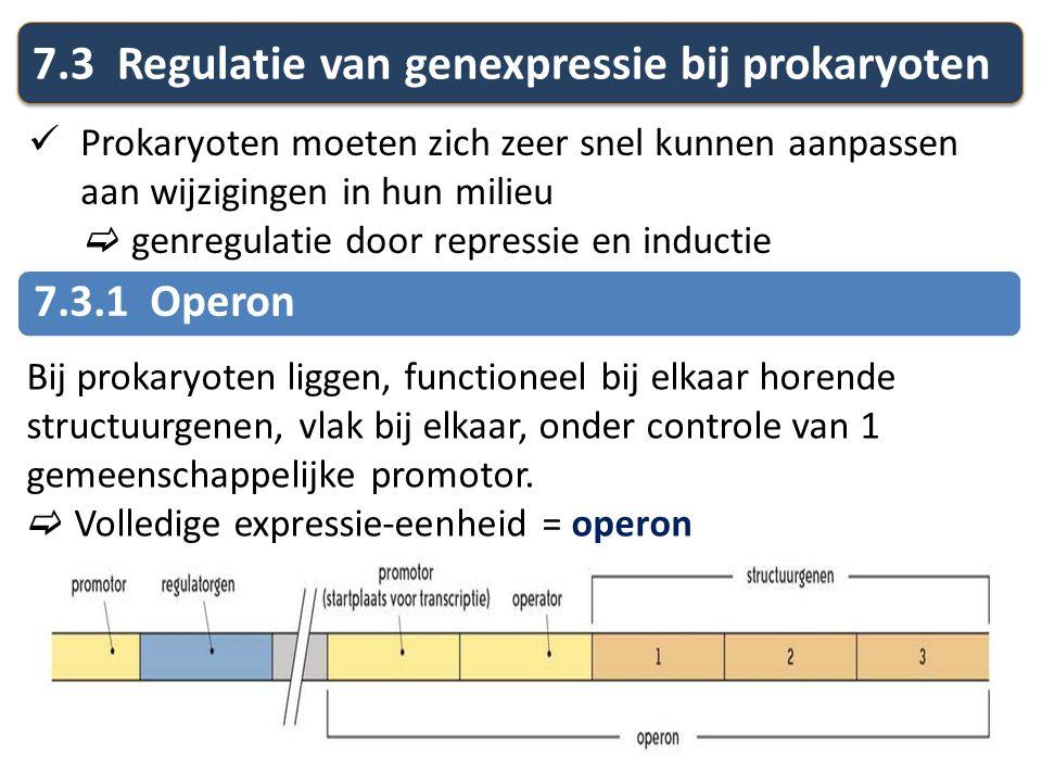 7.3 Regulatie van genexpressie bij prokaryoten Prokaryoten moeten zich zeer snel kunnen aanpassen aan wijzigingen in hun milieu  genregulatie door re