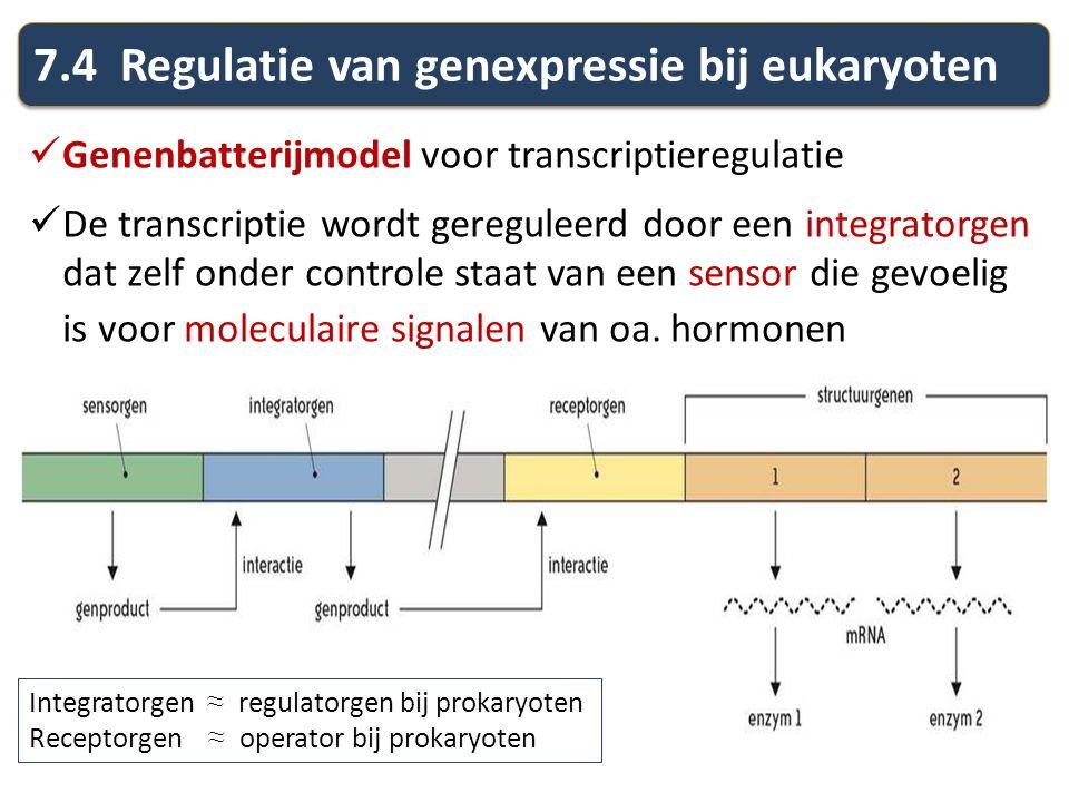 7.4 Regulatie van genexpressie bij eukaryoten Genenbatterijmodel voor transcriptieregulatie De transcriptie wordt gereguleerd door een integratorgen d