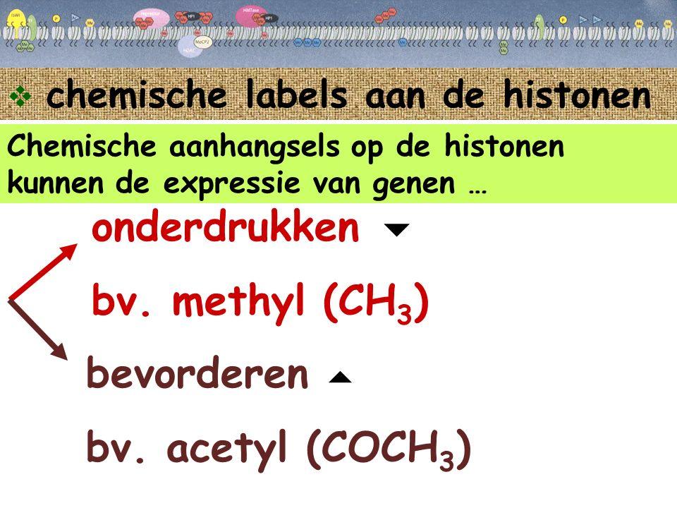  chemische labels aan de histonen Chemische aanhangsels op de histonen kunnen de expressie van genen … onderdrukken bv. methyl (CH 3 ) bevorderen bv.