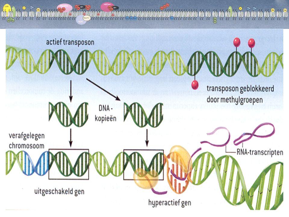  imprinting Imprinting beïnvloed genen in de gameten waardoor die genen inactief worden.