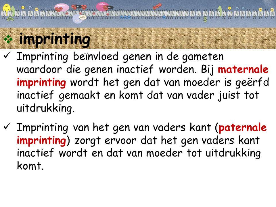  imprinting Imprinting beïnvloed genen in de gameten waardoor die genen inactief worden. Bij maternale imprinting wordt het gen dat van moeder is geë