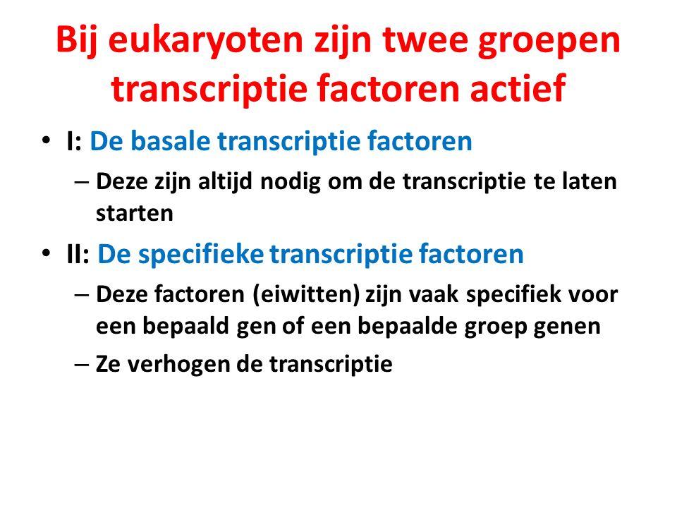 Bij eukaryoten zijn twee groepen transcriptie factoren actief I: De basale transcriptie factoren – Deze zijn altijd nodig om de transcriptie te laten