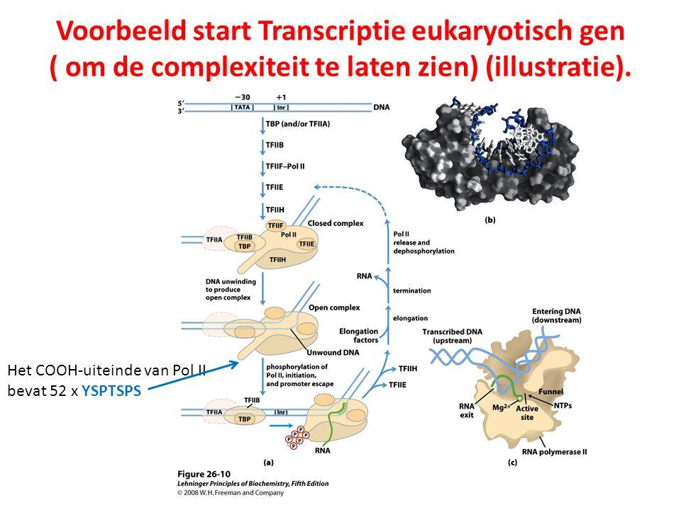 Voorbeeld start Transcriptie eukaryotisch gen ( om de complexiteit te laten zien) (illustratie). Het COOH-uiteinde van Pol II bevat 52 x YSPTSPS