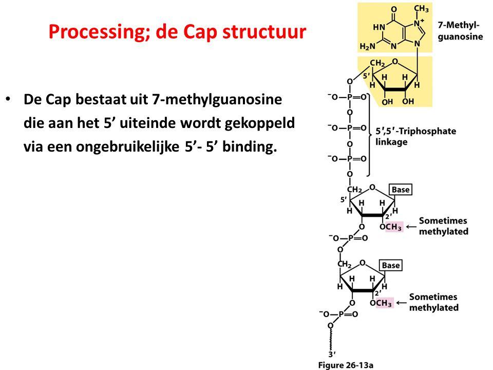 Processing; de Cap structuur De Cap bestaat uit 7-methylguanosine die aan het 5' uiteinde wordt gekoppeld via een ongebruikelijke 5'- 5' binding.