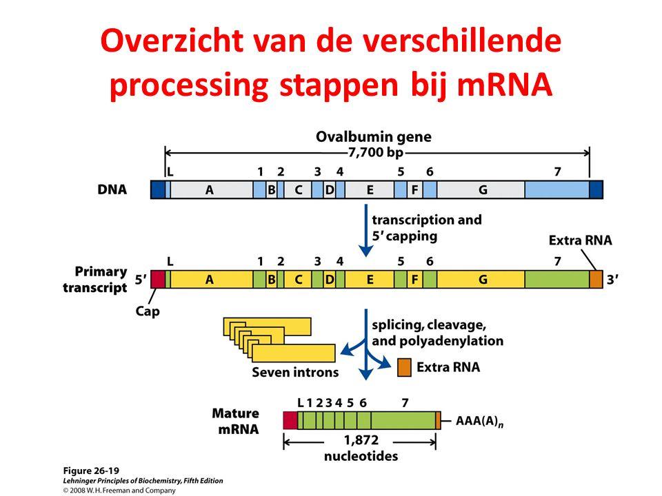 Overzicht van de verschillende processing stappen bij mRNA