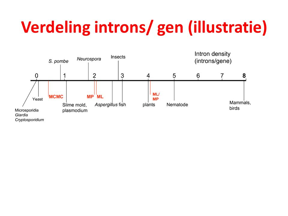 Verdeling introns/ gen (illustratie)