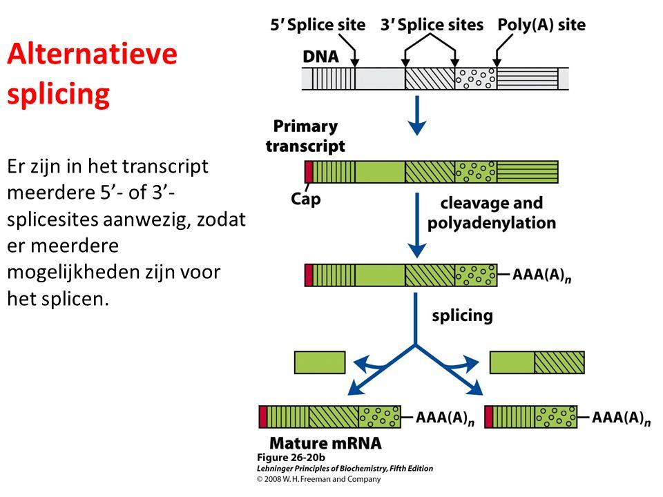 Alternatieve splicing Er zijn in het transcript meerdere 5'- of 3'- splicesites aanwezig, zodat er meerdere mogelijkheden zijn voor het splicen.