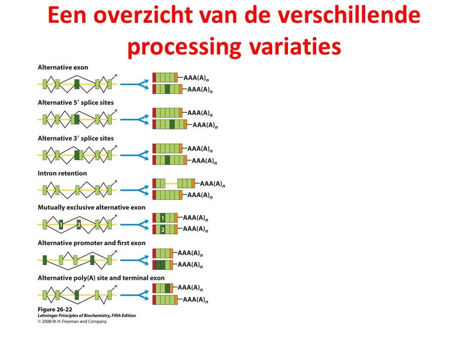 Een overzicht van de verschillende processing variaties