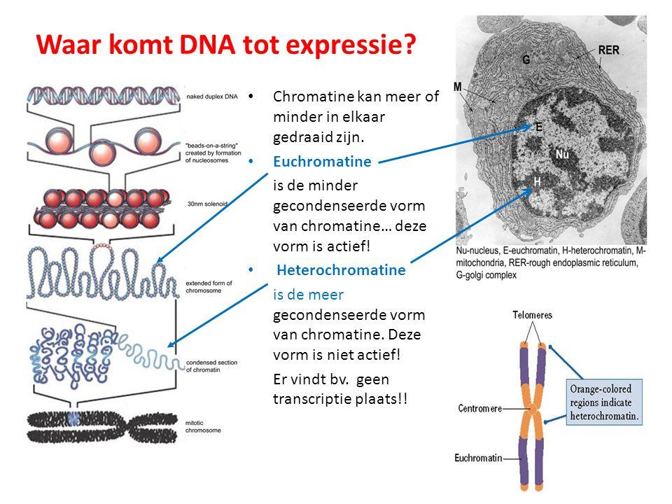 Waar komt DNA tot expressie? Chromatine kan meer of minder in elkaar gedraaid zijn. Euchromatine is de minder gecondenseerde vorm van chromatine… deze