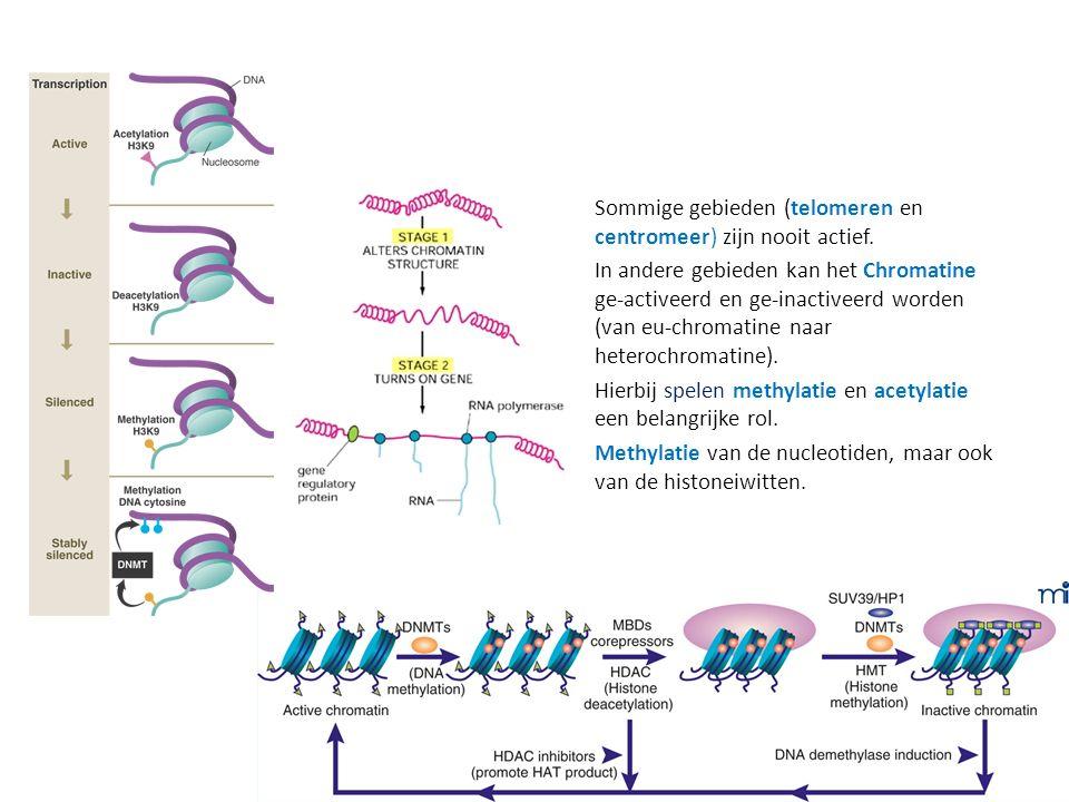 Sommige gebieden (telomeren en centromeer) zijn nooit actief. In andere gebieden kan het Chromatine ge-activeerd en ge-inactiveerd worden (van eu-chro