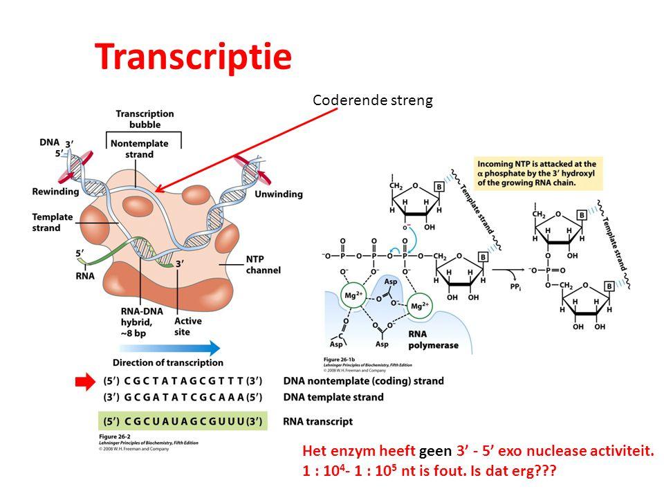 Transcriptie Coderende streng Het enzym heeft geen 3' - 5' exo nuclease activiteit. 1 : 10 4 - 1 : 10 5 nt is fout. Is dat erg???