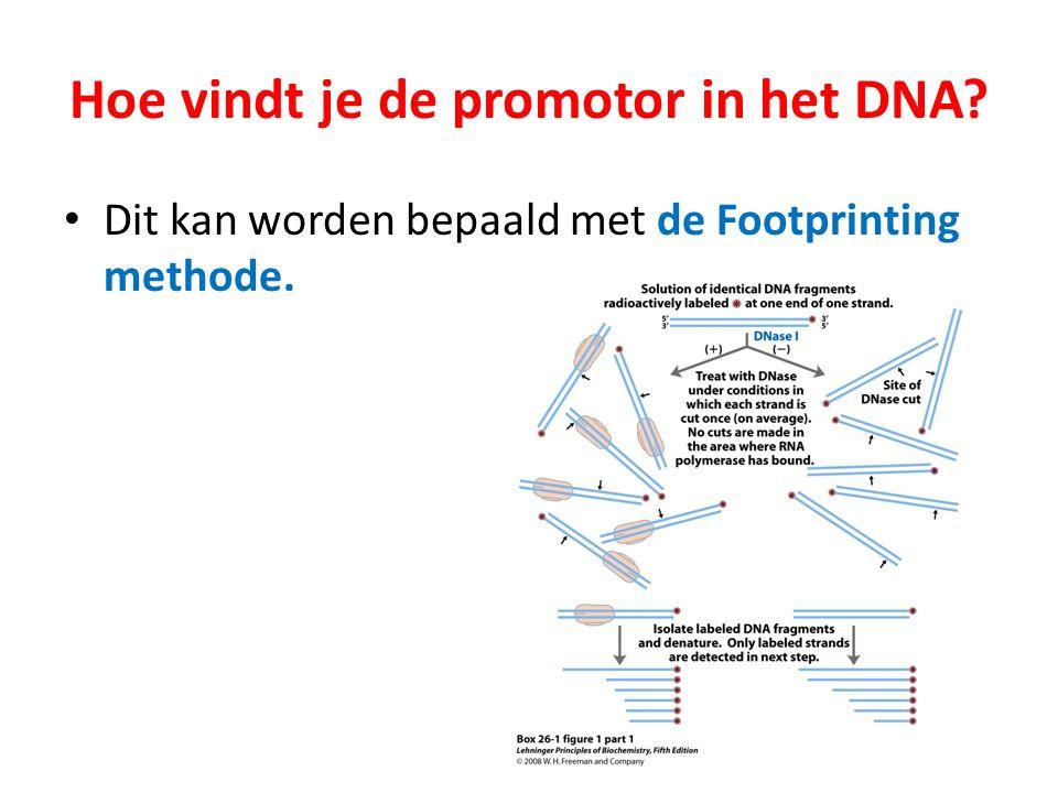 Hoe vindt je de promotor in het DNA? Dit kan worden bepaald met de Footprinting methode.