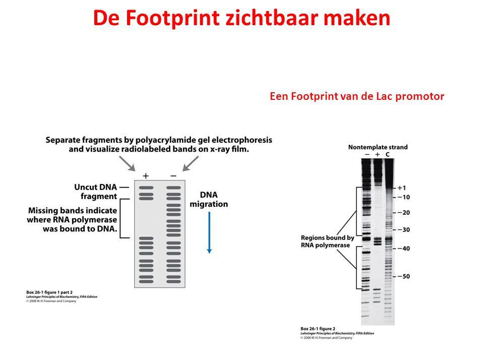 De Footprint zichtbaar maken Een Footprint van de Lac promotor